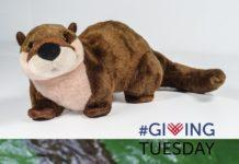 Otley the Otter Historic Jamestowne Giving Tuesday Williamsburg Virginia